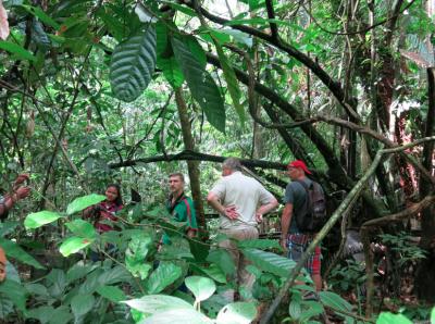 Touring the Concordia Plantations in Suriname.