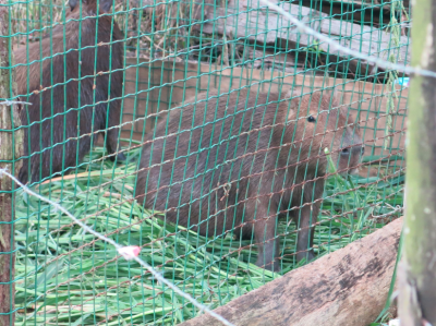 An unusual animal we saw at Concordia.