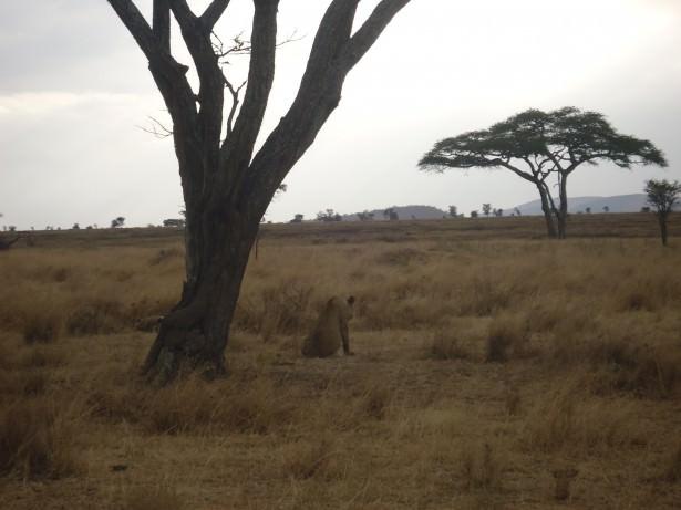 Safari in South Africa.