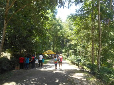Short walk to Misol Ha waterfalls.