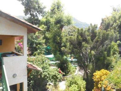 The leafy gardens at Posada Los Encuentros.