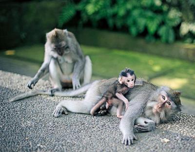 Monkeys stole my water!