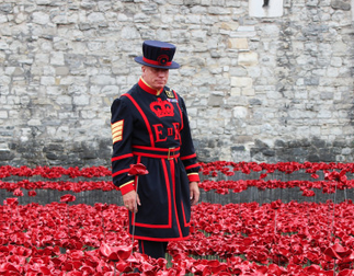Poppies at the Tower of London, England.