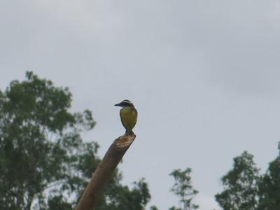 A bird at the Suriname to Guyana border.