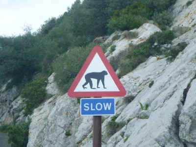 Slow to avoid the monkey, OK cool with that.