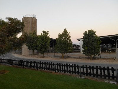 Trees in Mizra