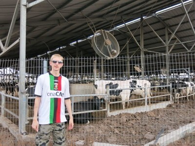 Holy cow!! The dairy at Mizra Kibbutz.