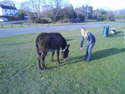 Feeding a pony in the New Forest