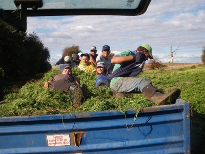 Epic day of cabbage patch weeding in Carrick. Oh the memories.