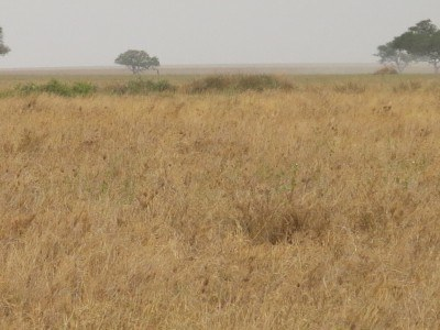 Can you spot the Cheetah??