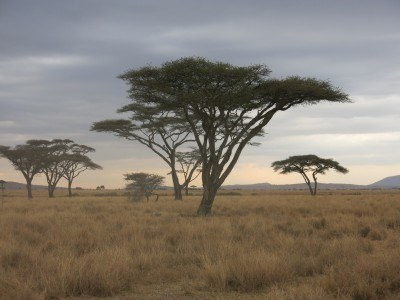 Pre sunset in the Serengeti