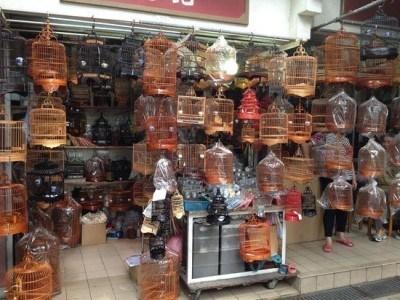 Bird Market in Mong Kok