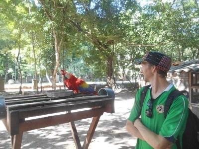Tropical birds of Honduras