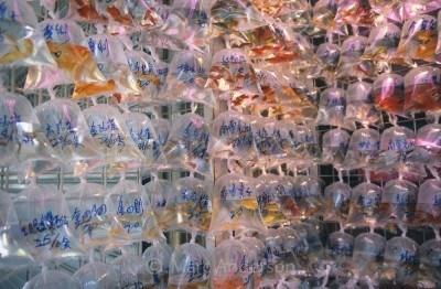 Goldfish in bags at the Mongkok Goldfish Market, Hong Kong, China.