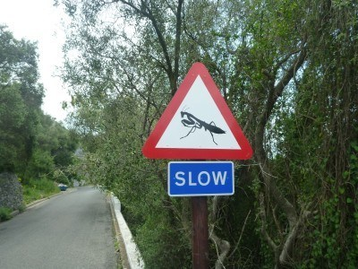 Careful you don't trod on the grasshoppers...