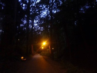 Dusk at the woods in Alum Chine