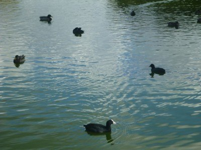 Local birds in Lagoan Isles