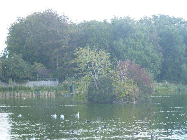The Lagoan Isles