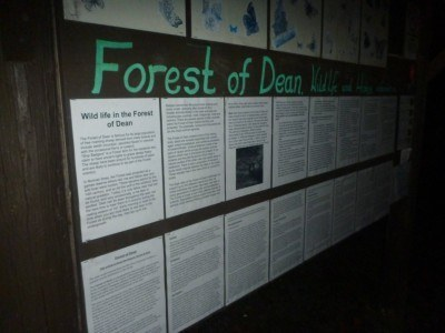 Night vision tour at the Forest of Dean in Gloucestershire, England