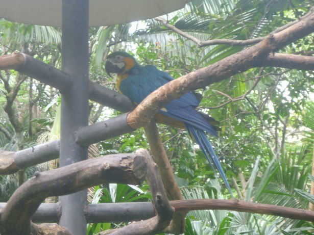Backpacking in Costa Rica: Snake World, Grecia and Zoo Ave