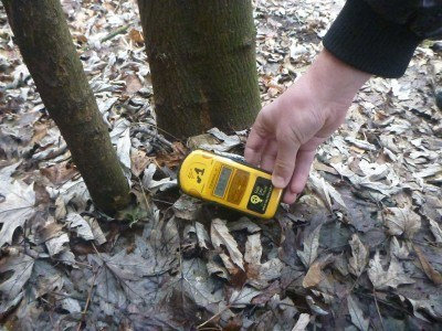 The Radioactive tree - Geiger counter goes wild