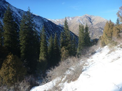 First part of the trail is foresty