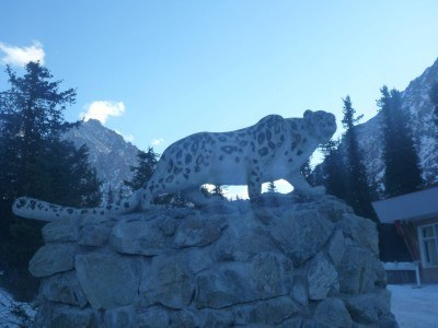 The famous snow leopard
