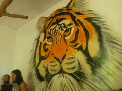 Eye of the tiger at Jungle Hostel