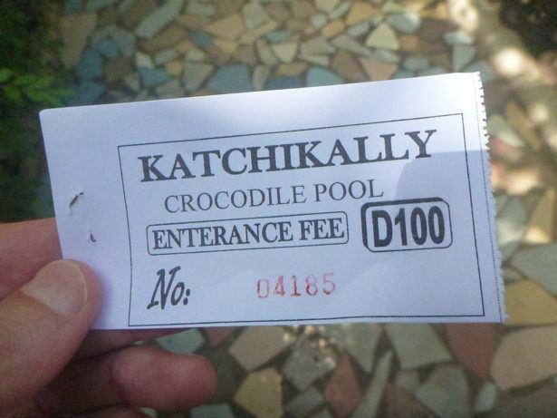 Stroking Crocodiles at Kachikally Pool, Bakau, The Gambia
