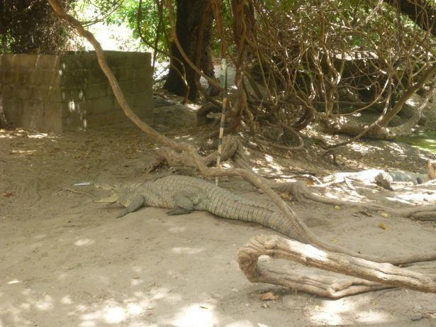 Kachikally Crocodile is sacred