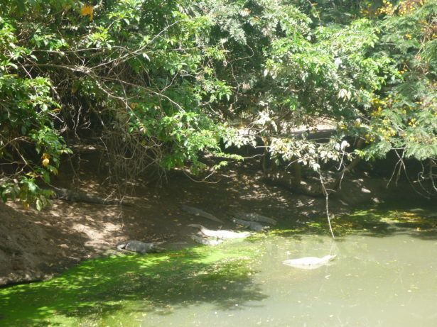 Kachikally Crocodile is sacred