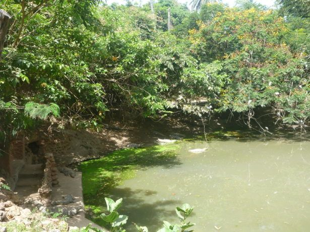 Kachikally Crocodile Pool needs your help