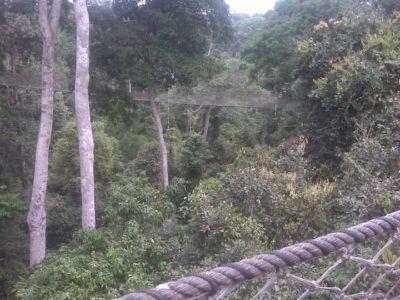 World Travellers: Samita from I am the Ocean - rainforest in Ghana