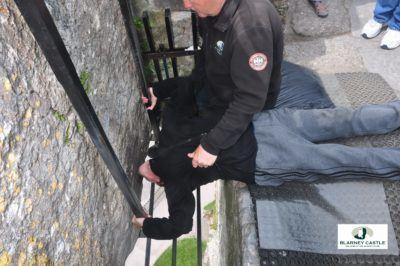 I kissed the Blarney Stone in June 2016