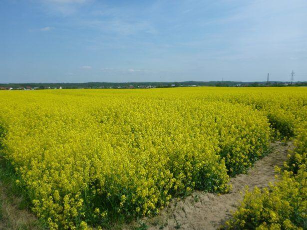 Yellow Fields Tourist Kokoszkowy Jonny Blair