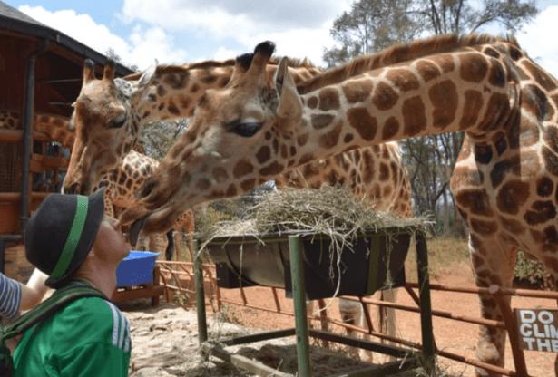 Backpacking in Kenya: Kissing and Feeding Giraffes Near Nairobi